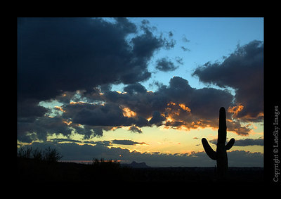 C95 Saguaro Sunset