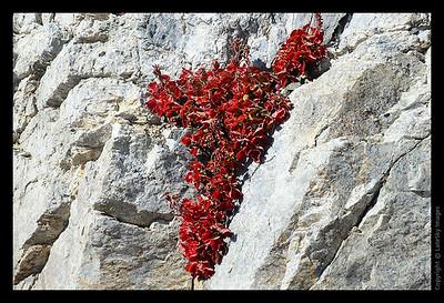 WY11_1064 Turing Flora on Granite