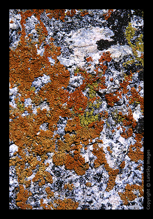 W08 Lichen On Granite