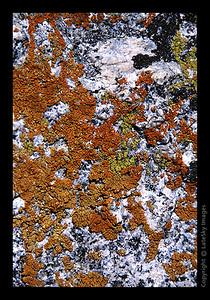 W08 Lichen On Granite