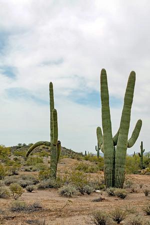 Cactus Farewell Wave
