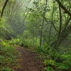 Lost Coast Trail Fog