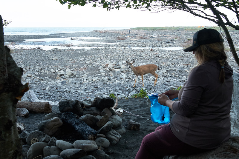 Early morning at the Big Flat campsite, deer walk past the campsite to walk along the beach