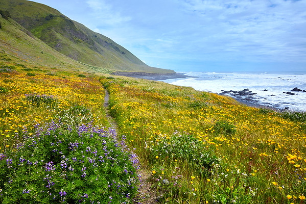 Wildflowers, to include the iconic California Poppy, dominate Spanish Flat during the spring.
