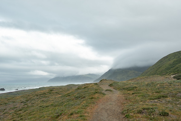Morning fog at the beginning of the Lost Coast Trail, near Mattole Beach