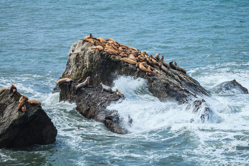 The seal colony at Punta Gorda.