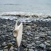 Whale Bone Balance