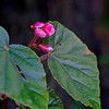 """Looking like surreal """"person"""" with the leaves as arms and the flower as the head,"""