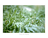 Delicate Freeze: For a large quantities of this print please contact me for pricing.