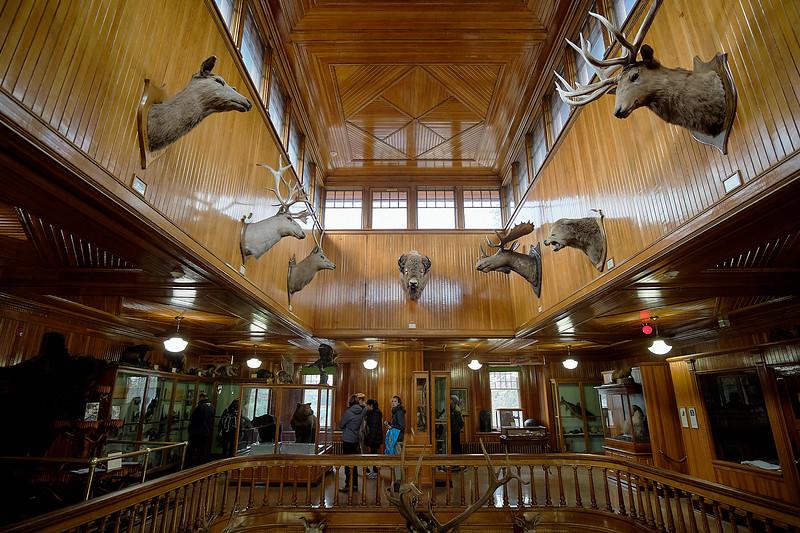 banff museum