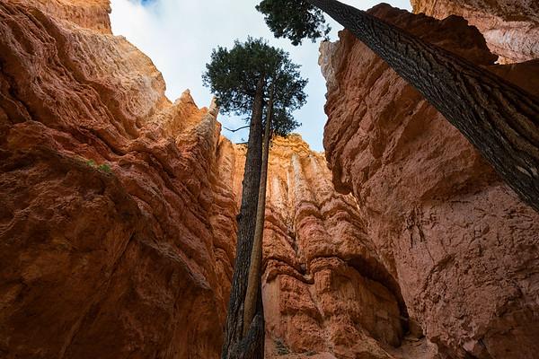Navajo Loop Trail, Bryce Canyon National Park