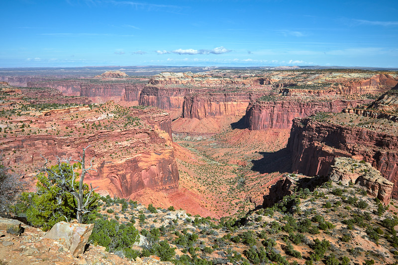 Holman Spring Canyon, Canyonlands National Park.
