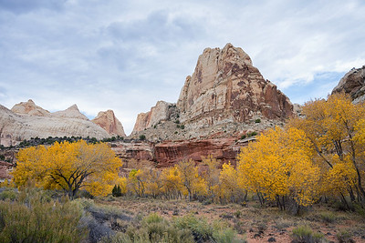 Along the Fremont River, Capitol Reef National Park