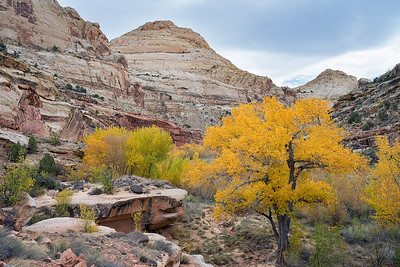 Fall colors in Capitol Reef National Park