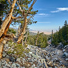 Bristlecone Pine trail at Great Basin National Park.