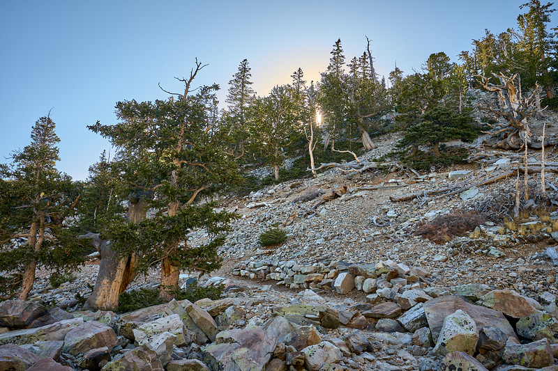 The Bristlecone Pine trail at Great Basin National Park.