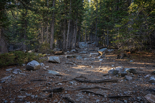 The start of the Bristlecone Pine & Glacier trail at Great Basin National Park.
