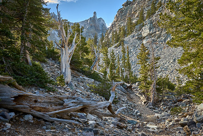 The trail connecting the Bristlecone Pine trail to the Glacier trail under Wheeler Peak, Great Basin National Park.
