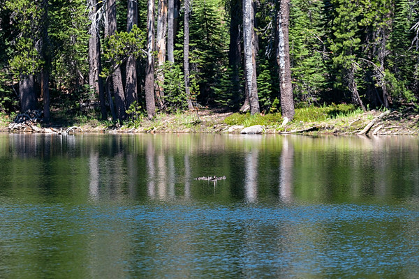 A family of ducks in one of the unnamed lakes in the Caribou Wilderness