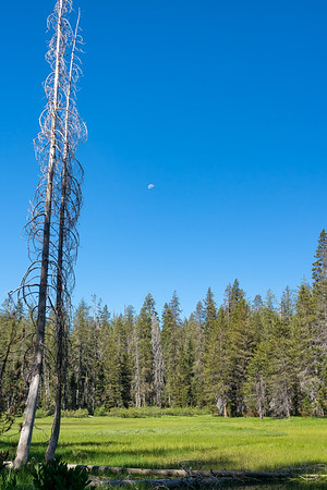 Moon over Indian Meadow, Caribou Wilderness