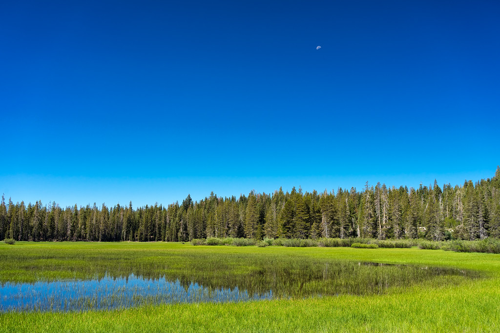Hay Meadow, Caribou Wilderness, Lassen National Forest