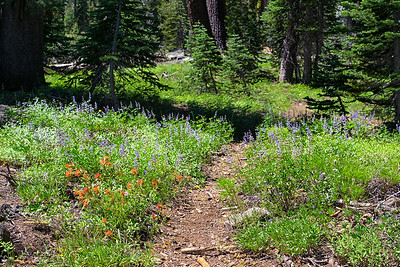 Wildflowers on the trail to Posey Lake, Caribou Wiliderness
