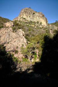 The sun, still hidden by terrain, frames a tree on the Old Pinnacles Trail