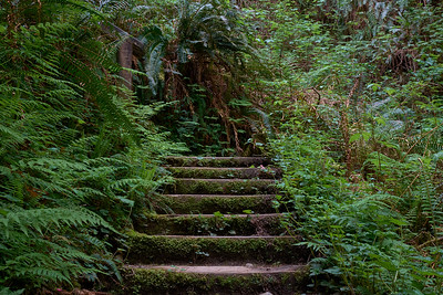 Stairs out of Fern Canyon to the James Irvine Trail