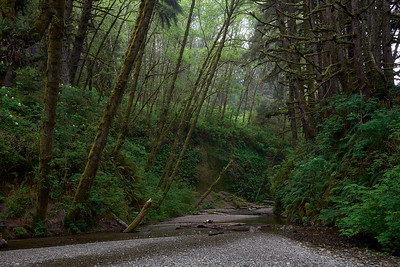 Entrance to Fern Canyon from Gold Bluffs Beach