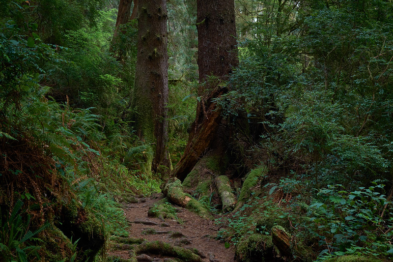The James Irvine Trail out of Fern Canyon