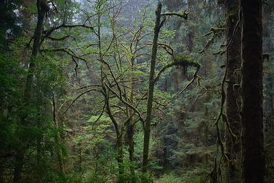 Along the James Irvine Trail