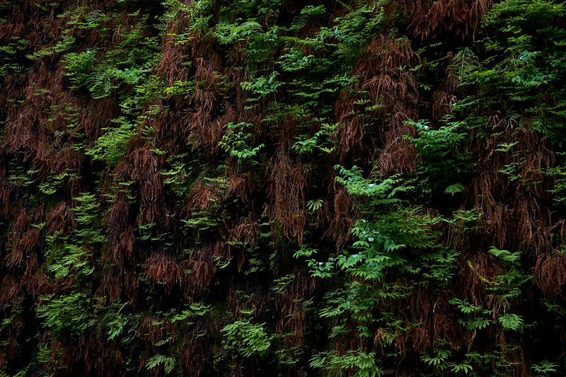 Closeup of the walls of Fern Canyon