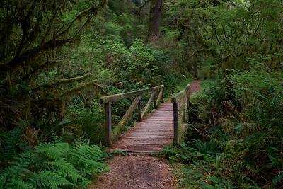 Bridge along the James Irvine Trail