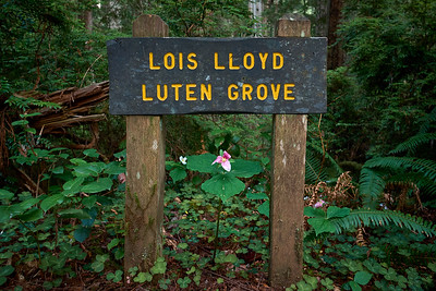 Grove signage along the Miner's Ridge Trail