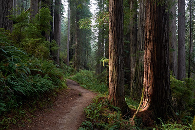 Miner's Ridge Trail at Redwood National State Park