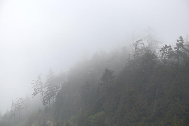 Fog at Gold Bluffs Beach