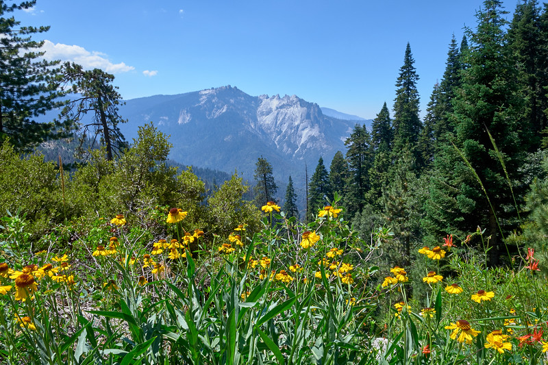 Sneezeweed and Indian Paintbrush wildflowers along the High Sierra Trail