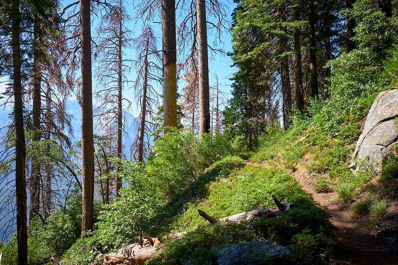 The High Sierra Trail between Crescent Meadow and Bearpaw Meadow