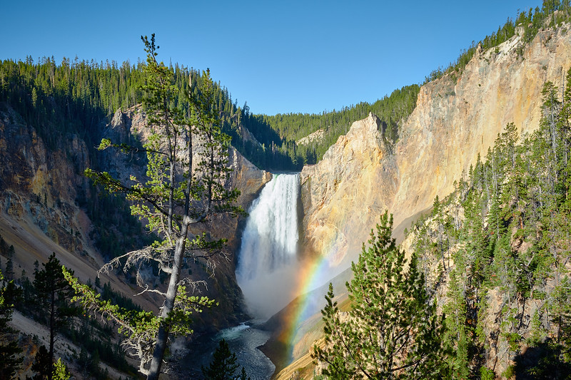 Sunlight hits mist from Lower Yellowstone Falls, creating a rainbow, viewed from Red Rock Point.