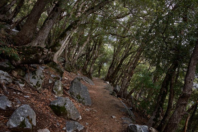 Yosemite Falls trail.