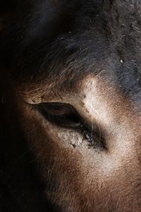 Donkey See, Sad Puslinch, Ontario
