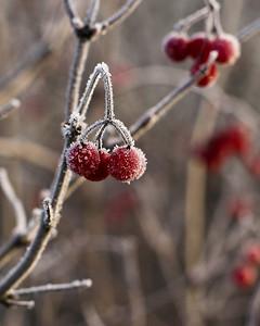 Frozen Dingleberries - Kitchener, ON