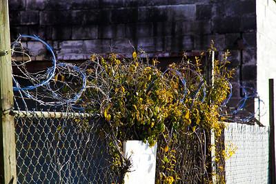 What razor wire? - Memphis, TN