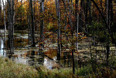 "Last Wetland on Ottawa Street #1 - Kitchener, Ontario Also available as a 30""x44"" framed canvas print - See Fine Art Gallery"