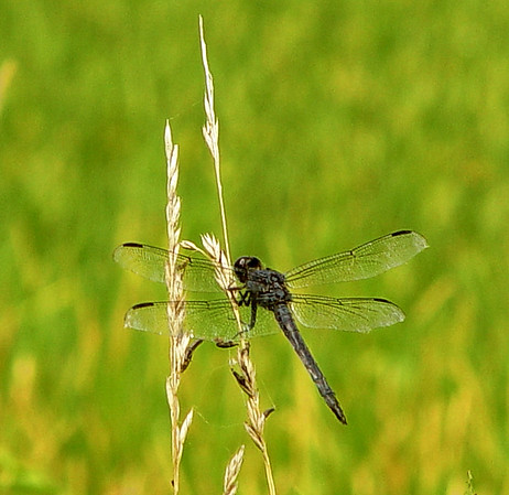 cropped low resolution dragonfly