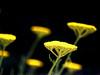 Yellow Ufoes