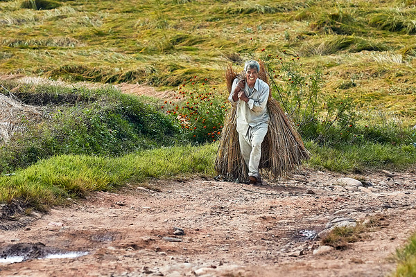 Man walking up a slope dragging hay on his back