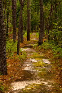 The Tar Kiln Trail meanders through mixed forest.