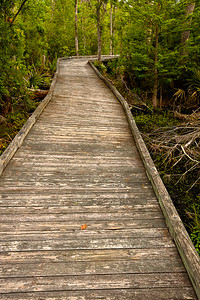 The Palmetto Boardwalk is 3/4 mile long and winds through the marsh