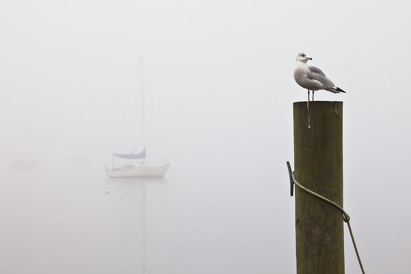 Winter fog in Washington, NC